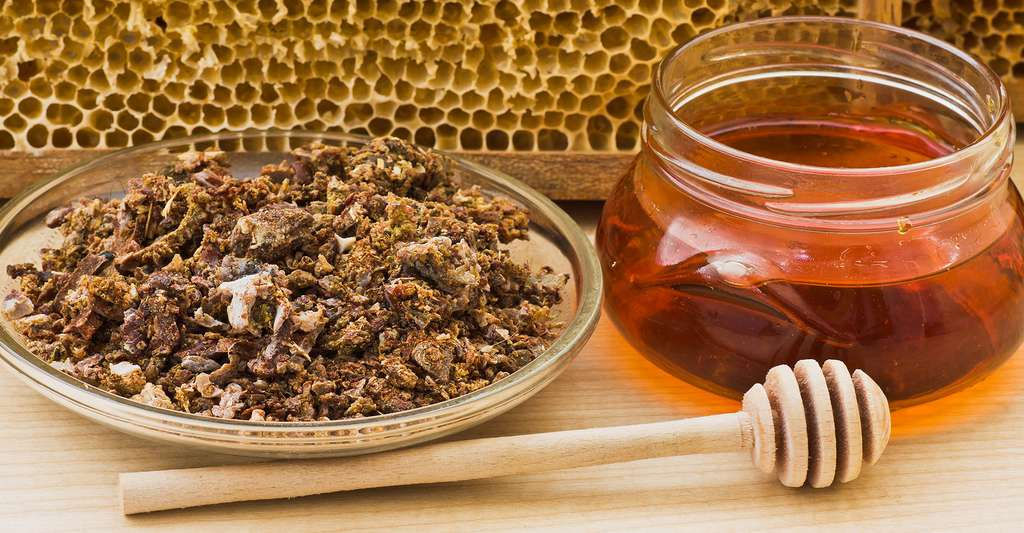 De la propolis (à gauche) et du miel (à droite). © Auhustsinovich, Shutterstock