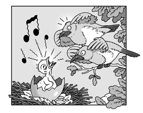Le chant des oiseaux est un apprentissage. © Patrick Goulesque