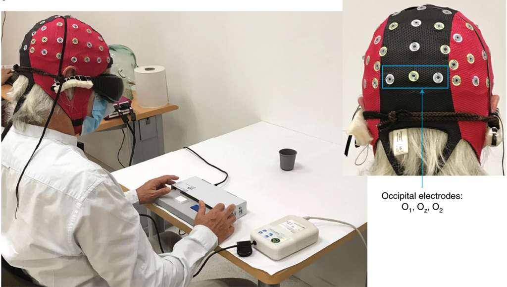 Les réponses comportementales et l'activité cérébrale ont été enregistrées simultanément pendant le test visuel. L'analyse des données EEG s'est concentrée sur l'activité enregistrée à partir des canaux occipitaux O 1 , O z et O 2 . © professeurs José-Alain Sahel et Botond Roska