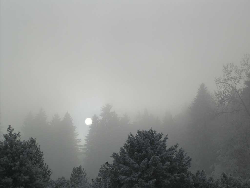 Les stratus sont des nuages gris et bas comme ce stratus nebulosus. © Simon Eugster, Wikimedia Commons, CC by-sa 2.5