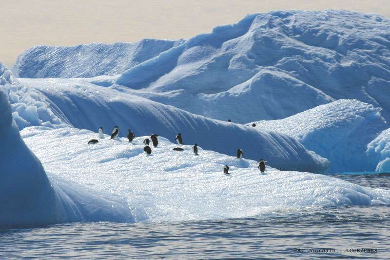 Manchots Adélie sur un morceau d'iceberg