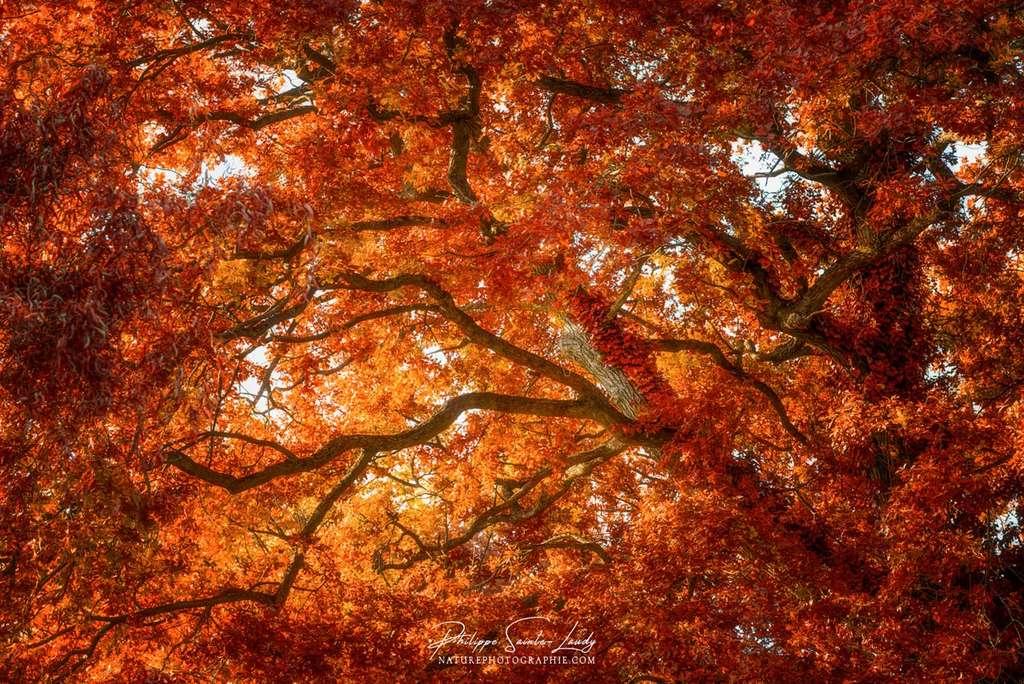 L'automne en contre-plongée