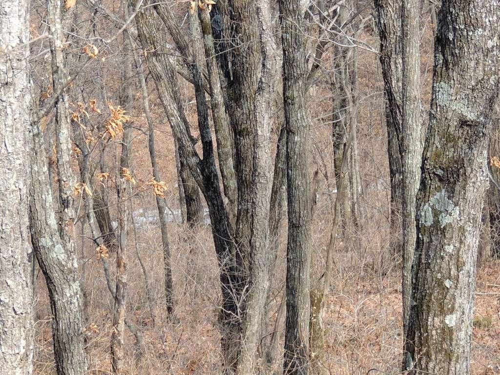 Trouverez-vous le léopard caché dans cette photo ? © Land of the Leopard Nature Reserve, Facebook