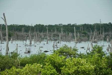 Le marécage de la Cienaga Grande, sur la côte caraïbe de la Colombie, souffre des digues et des routes construites par l'homme. Au cours de la seconde partie du XXe siècle, la moitié de sa forêt de mangrove a disparu. © Lionel Goujon et Gwenael Prié