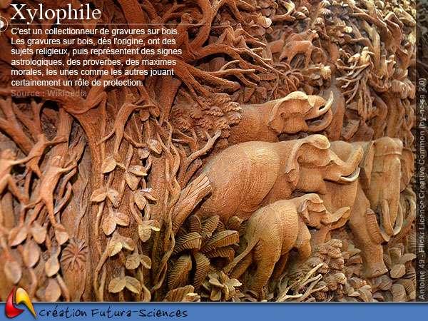 Qui est le xylophile ?