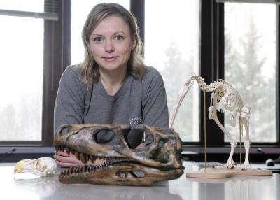 Darla Zelenitsky devant des spécimens de crânes d'oiseaux et de dinosaures analysés. © Courtesy of University of Calgary