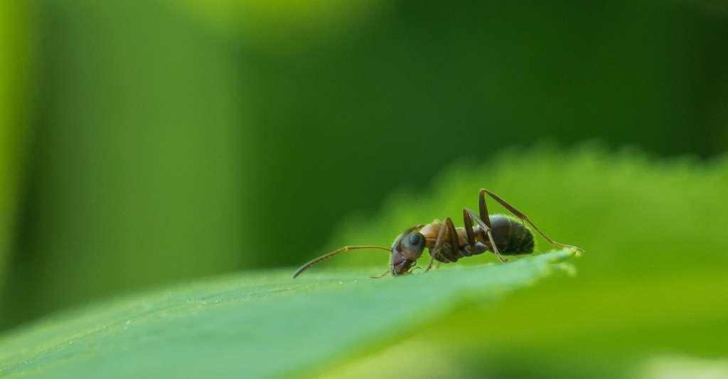 Le marc de café peut notamment servir de répulsif naturel contre les fourmis. © Di_Chap, Flickr, CC by-NC-ND 2.0