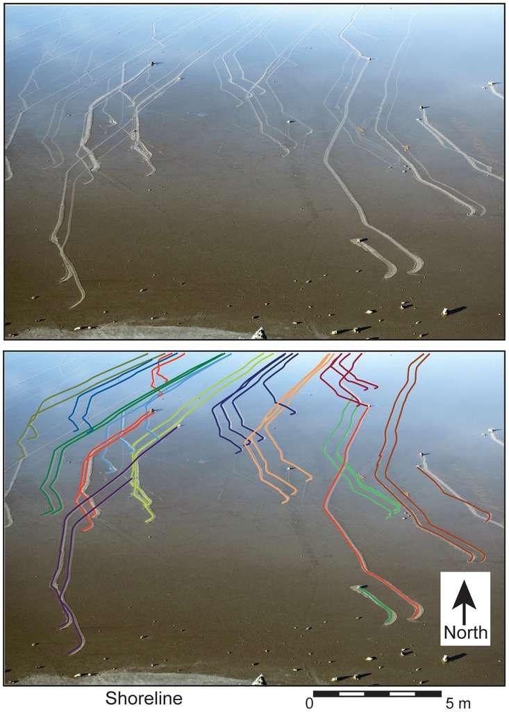 Les sillages laissés par les pierres photographiées par un appareil automatique. L'image du bas montre les trajectoires, mettant en évidence les déplacements parallèles de certaines d'entre elles. © Richard D. Norris et al., Plos One