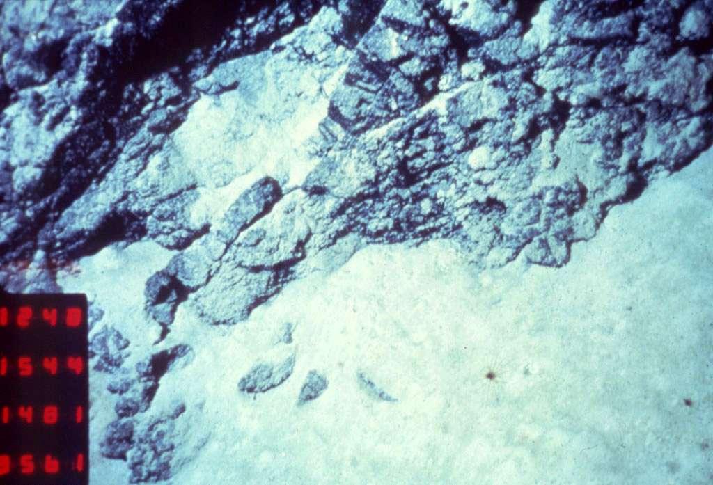 Ci-dessus, les images de la plongée 14 de la campagne Galinaute, effectuées par le Nautile en 1986. On remarque des péridotites schisteuses recoupées par un filon de dolérite, dont la bordure (à droite) est prismée par refroidissement brutal. © Jacques Kornprobst, Ifremer