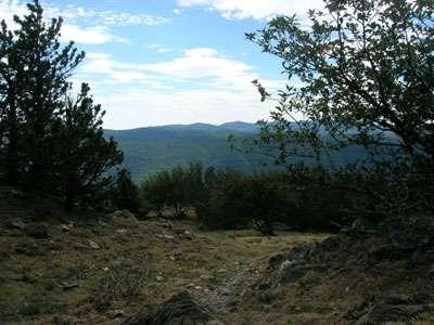 Cévennes du Mont Aigoual.