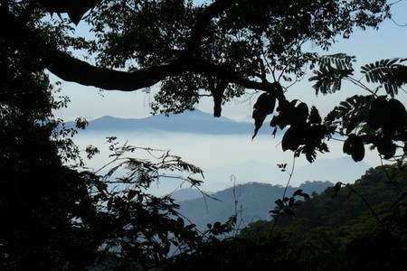 Le mont Mabu, vu du camp de base de l'équipe. © Julian Bayliss/Kew