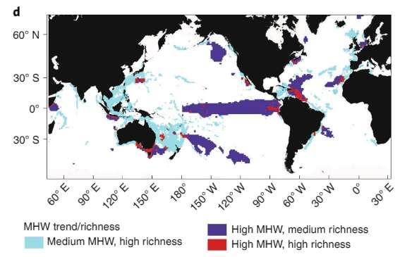 Hauts lieux de biodiversité pouvant être menacés par les vagues de chaleur marines. En bleu : canicules de moyenne intensité, biodiversité d'une richesse élevée. En violet : canicules de forte intensité, biodiversité d'une richesse moyenne. En rouge : canicules de forte intensité, biodiversité d'une richesse élevée. © Dan Smale et al., Nature Climate Change, 2019