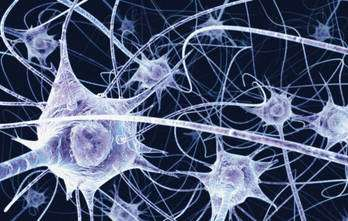 Vue de neurones. © Benedict Campbell Wellcome, Flickr, cc by nc nd 2.0