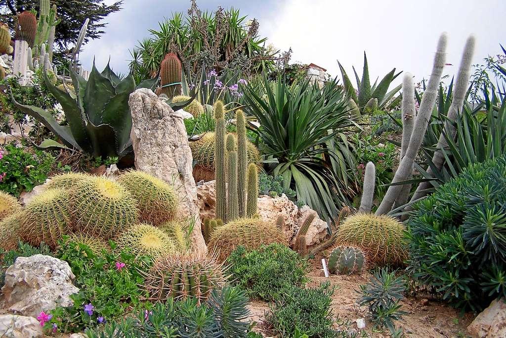 Le jardin exotique d'Èze, dans les Alpes-Maritimes
