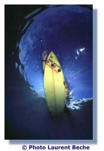 Ces photos en contre-plongée sont inédites et montrent ce que voient les requins avant une attaque sur l'Homme... © L. Beche