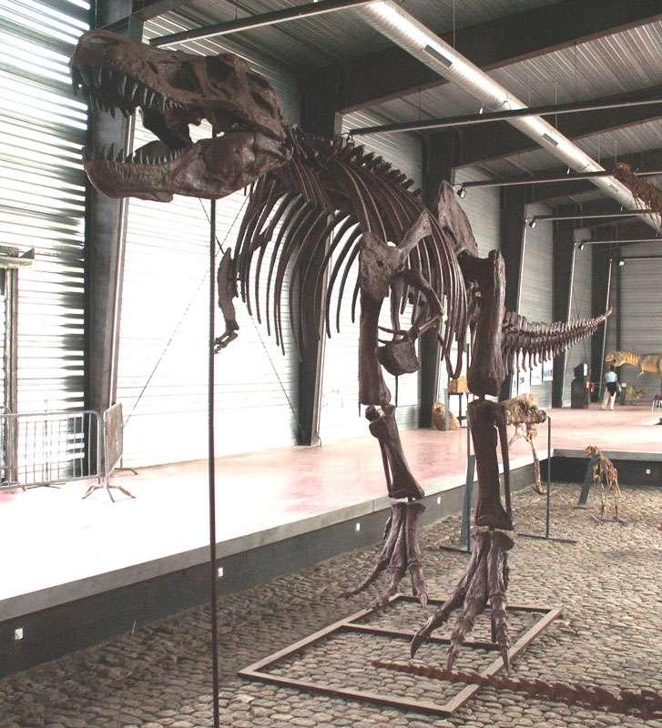 Le célèbre Tyrannosaurus rex