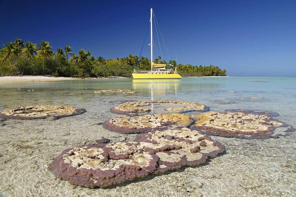 Coraux à fleur d'eau à Makemo et le Banana Split, bateau d'Antoine. © Antoine