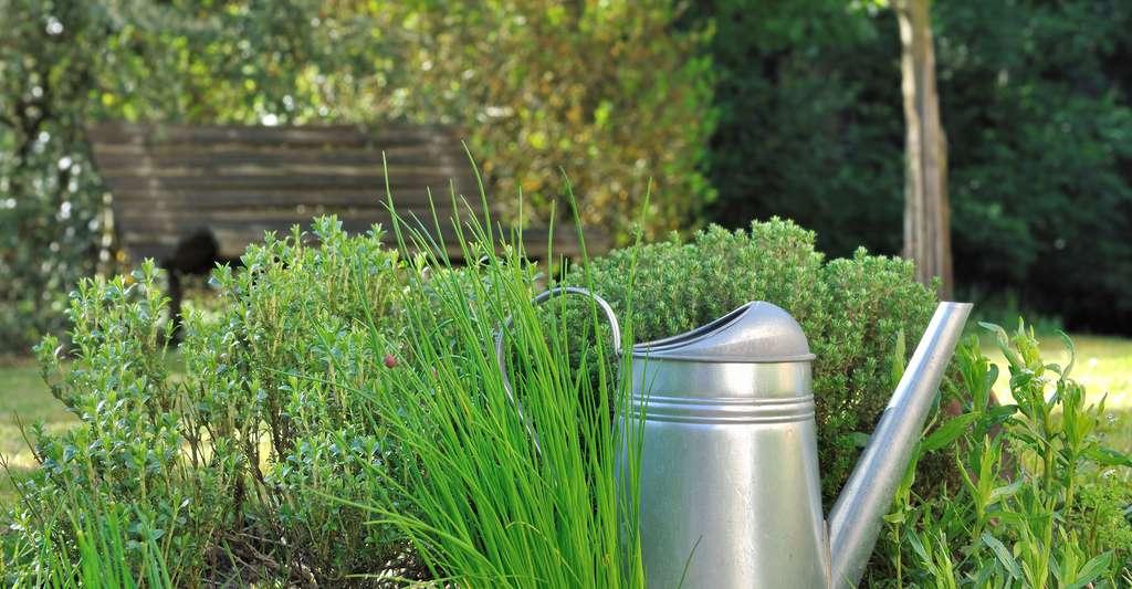 Quel arrosage pour mes plantes aromatiques ? © Sanddebeautheil, Shutterstock
