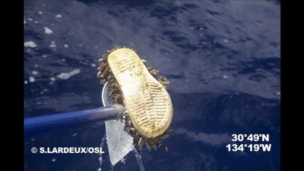 L'expédition 7e continent souhaitait rapporter des preuves visuelles de la pollution au plastique des océans, en voici une. Il n'existe pas à proprement parler de continent de plastique, mais les gyres accumulent et dégradent les macrodéchets. On peut observer dix macrodéchets défiler toutes les heures, sur seulement 150 m de long. © Soizic Lardeux, OSL