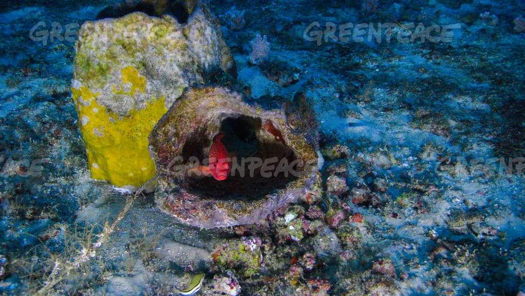 Un poisson dans le récif. © Greenpeace