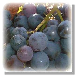 Il y a 150 ans, Louis Pasteur menait ses premières expériences sur le vin.