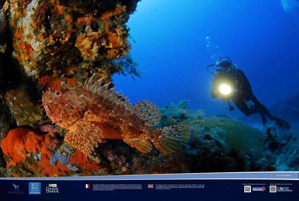 La grande rascasse rouge, un poisson nocturne
