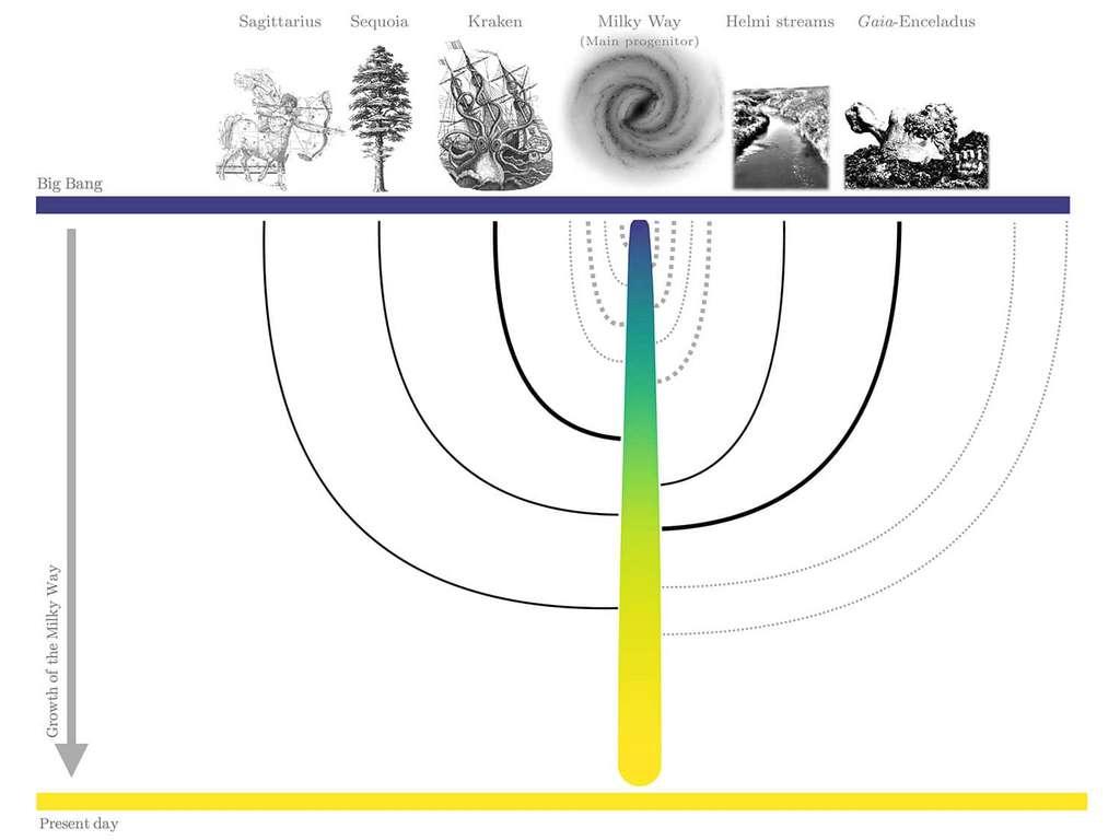 Ici, l'arbre généalogique de la Voie lactée tel qu'imaginé par les chercheurs de l'université de Heidelberg (Allemagne). Le principal ancêtre de la Voie lactée est désigné par le tronc de l'arbre, coloré en fonction de sa masse stellaire. Les lignes noires indiquent les cinq galaxies satellites identifiées. Les lignes pointillées grises illustrent d'autres fusions que la Voie lactée devrait avoir subies, mais qui ne pourraient pas être liées à un ancêtre spécifique. © J. Pfeffer, D. Kruijssen, R. Crain, N. Bastian, Université de Heidelberg