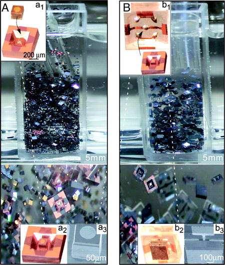 La première étape d'auto-assemblage durant la réalisation de diodes électroluminescentes (Led), photographiée à deux moments différents (images A et B), de loin (en haut) et de près (en bas). Les éléments baignent dans de l'éthylène-glycol à 100°C. Les petites images insérées montrent les éléments (l'un de silicium, de forme creuse, et l'autre en or, proche d'un cube) avant leur auto-assemblage (a1 et b1) et après (a2 et b2). Prises au microscope électronique, les photographies a3 et b3 montrent les éléments et leur alignement. © Heiko O. Jacobs et al.