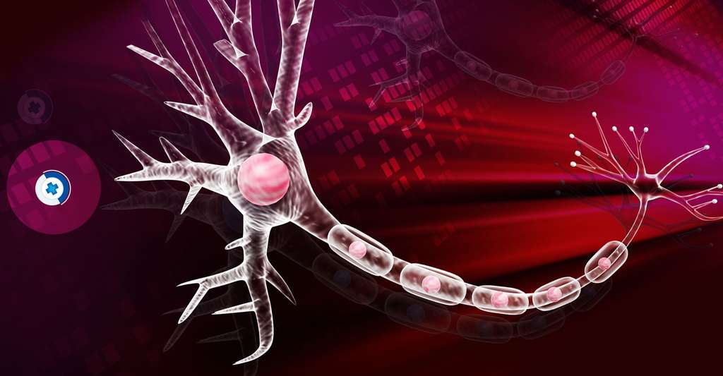 Illustration digitale d'un neurone. © Créations Shutterstock