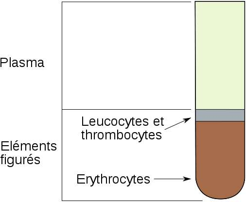 Le taux d'hématocrite permet d'avoir une idée de la santé du patient. © DR