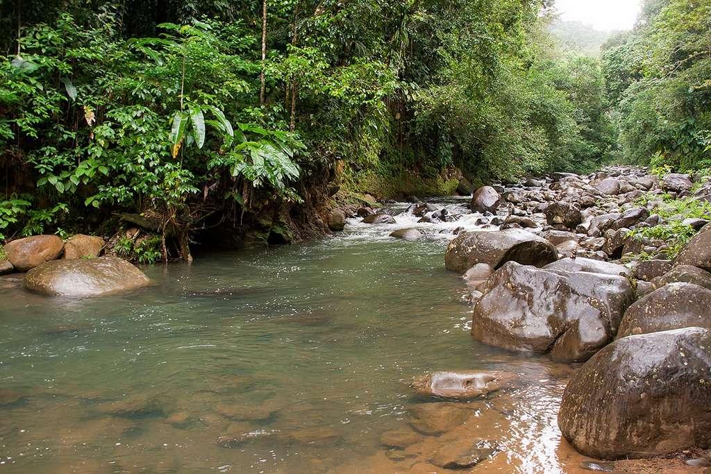 La forêt de Basse-Terre dans le parc national de la Guadeloupe. © Luca Moglia, Flickr