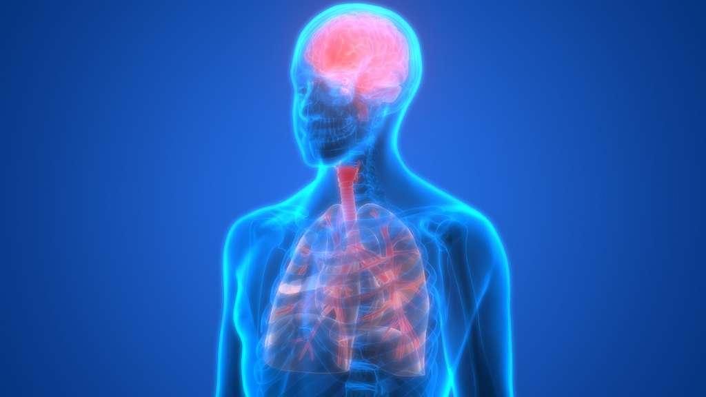La neurophysiologie respiratoire est un domaine de recherche ancien. © magicmine, Adobe Stock