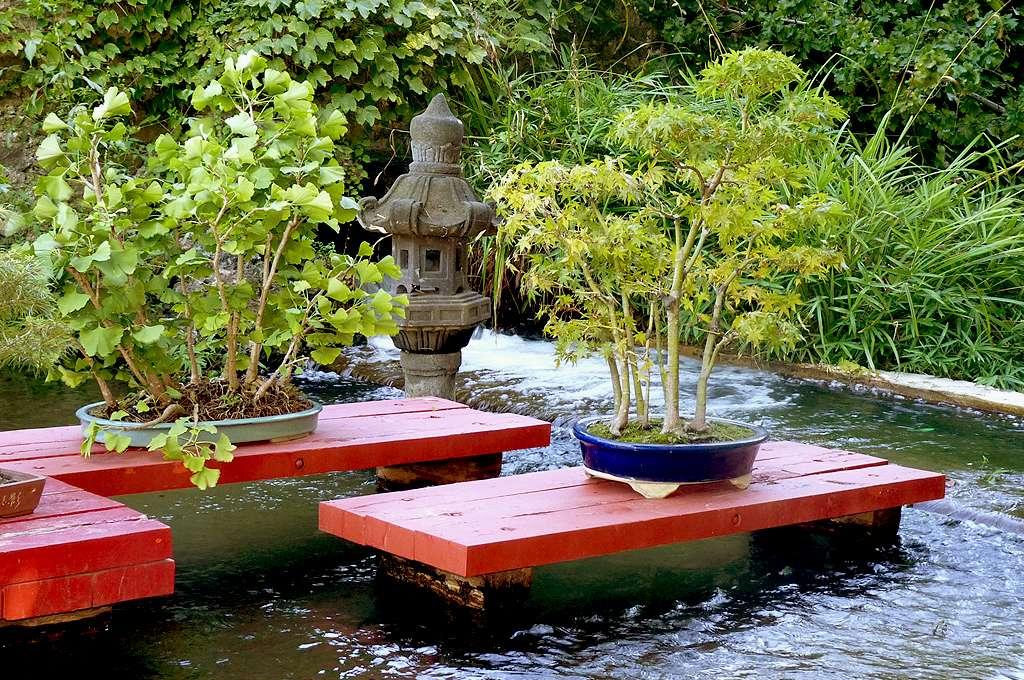 Orme et érable bonsaïs de la bambouseraie de Prafrance. © AB, CC by-nc 2.0