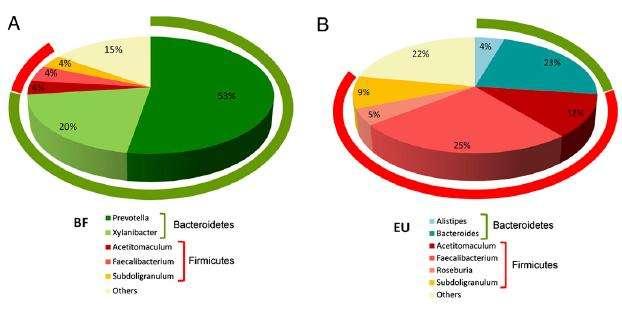 Les bactéries des enfants burkinabés (BF) sont composées de plus de Bactéroidètes que de Firmicutes. Chez les enfants européens (EU), c'est l'inverse. © PNAS