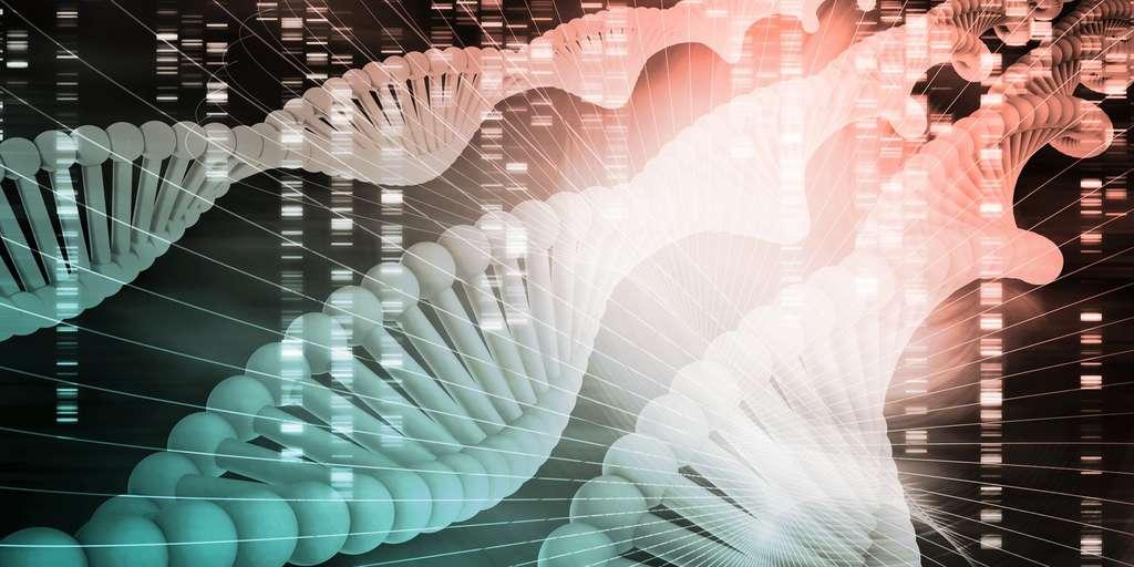 Lorsqu'elle est possible, l'analyse des gènes permet de compléter voire de corriger les conclusions évolutives fondées sur l'analyse morphologique. © kentoh, Fotolia