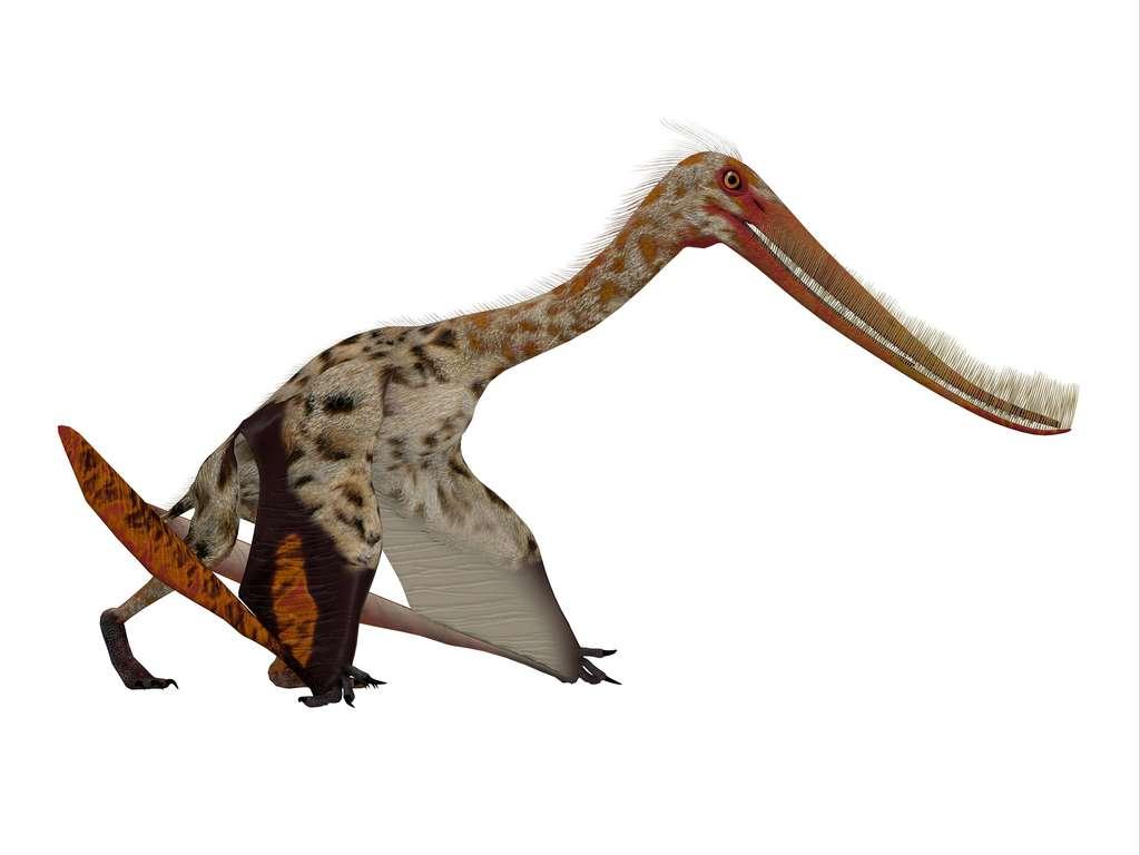 Vue d'artiste de Pterodaustro guinazui © Catmando, Adobe Stock