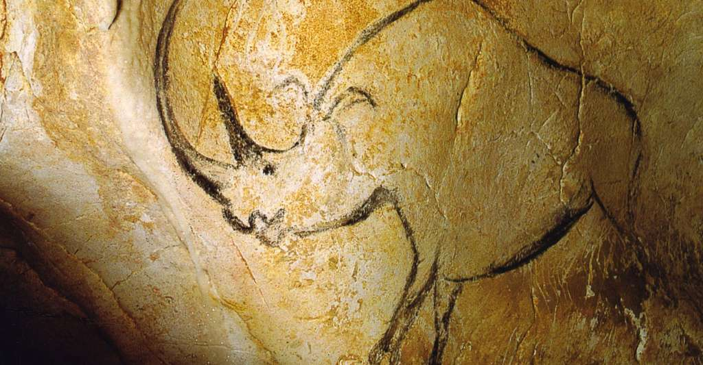 Rhinocéros à grande corne, Grotte Chauvet. © Inocybe, Wikimedia commons, DP