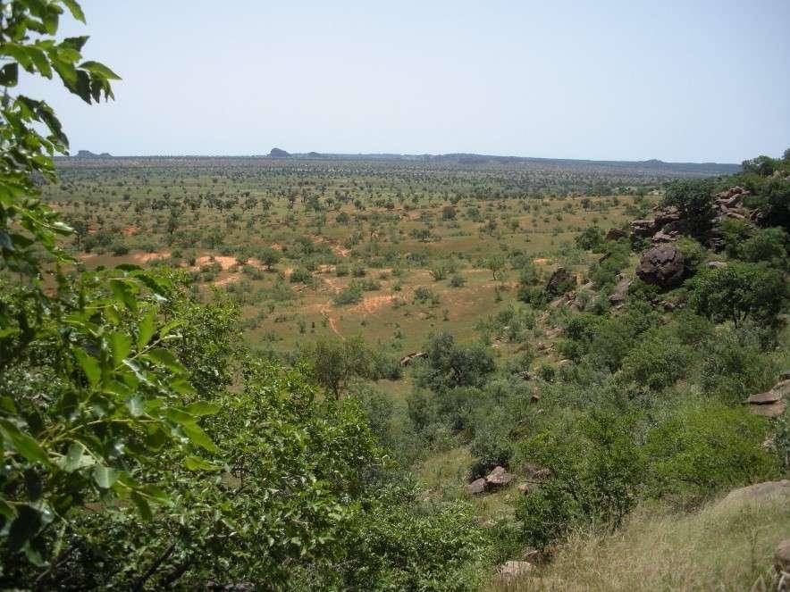 Peuplement d'arbres isolés dans le nord du Mali (Gourma). © Pierre Hiernaux, GET