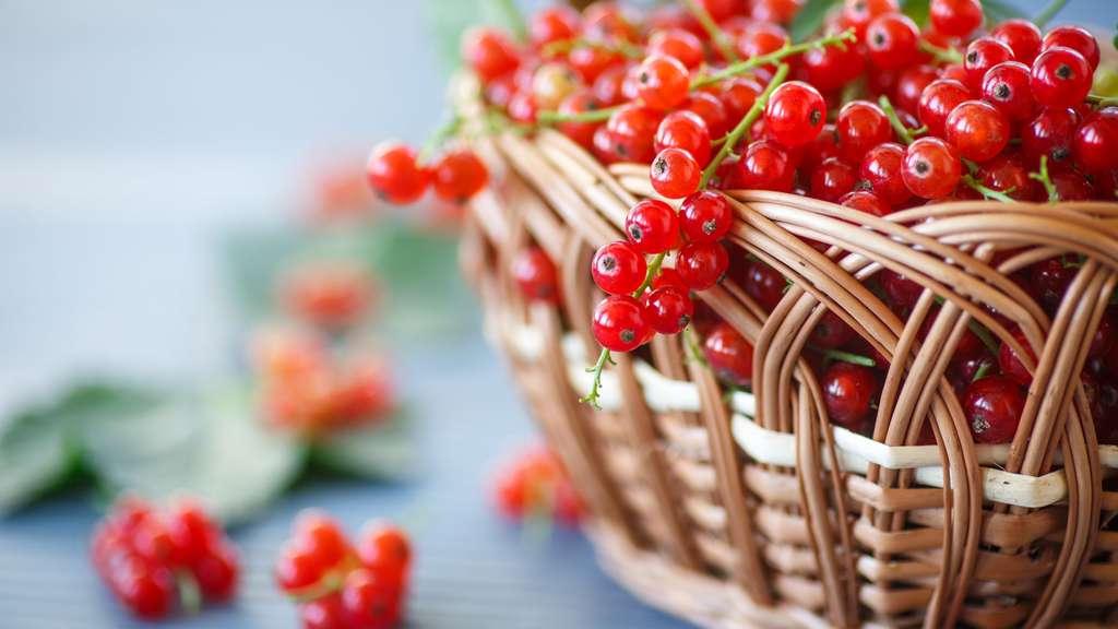 Groseilles fraîchement cueillies. © Peredniankina, Shutterstock