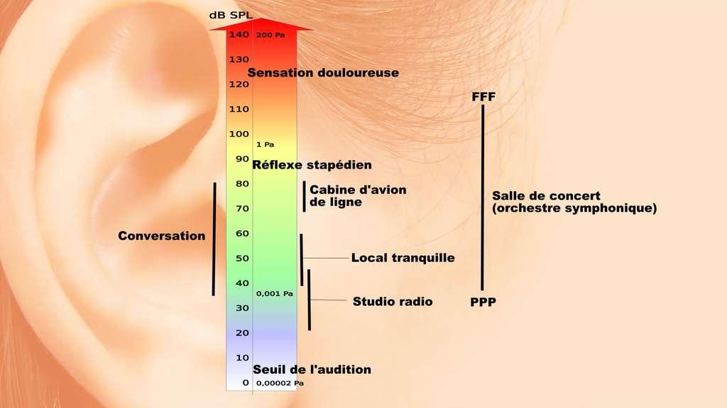 Échelle des niveaux sonores avec seuil d'apparition du « réflexe stapédien » et de la douleur. © A7N8X, CC by-sa 3.0