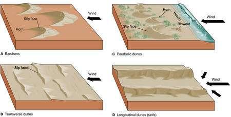 Les 4 types principaux de dunes Crédit : Arjuna Multimedia, 2005