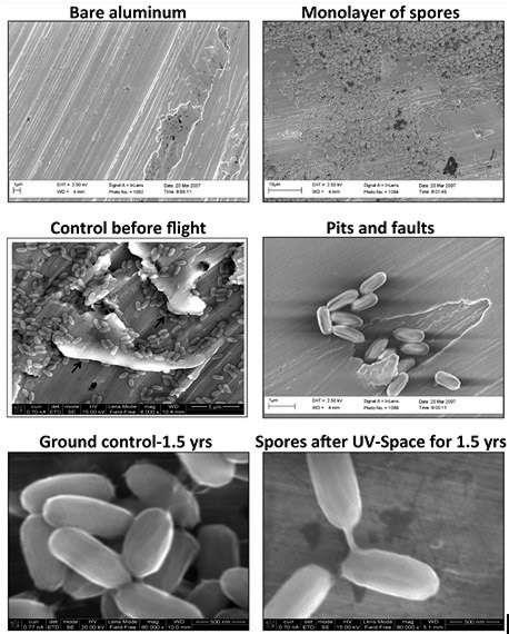 Les spores de la souche SAFR-032 de Bacillus pumilus de l'expérience Expose à l'extérieur de la Station spatiale internationale. En haut à gauche, on voit le support en aluminium (bare aluminum). En haut à droit, une monocouche de spores (monolayer of spores). Au milieu, une image de contrôle avant le vol (control before flight) et un cliché au niveau d'un défaut du support (pits and faults). En bas, des portraits rapprochés des spores avant l'expérience (ground control) et après 18 mois d'exposition aux UV dans l'espace (spores after UV-Space). © P. Vaishampayan et al., Astrobiology