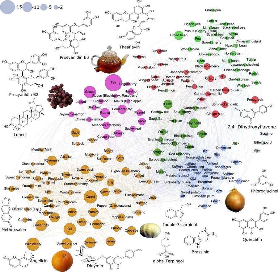 Une classification des aliments selon le nombre et le type de molécules aux propriétés anticancéreuses qu'ils contiennent. © Kirill Veselkov et al, Scientific Reports, 2019