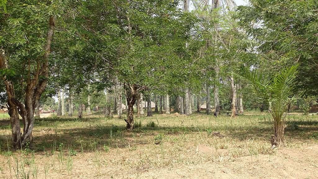 Station ICCN (Institut congolais pour la Conservation de la nature) de Bili-Uere. © AWF, tous droits réservés