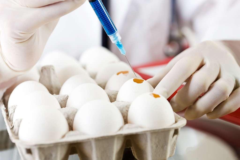 La production de vaccins utilise des œufs. Faut-il revoir cette technique ? © seanlockephotography, Fotolia