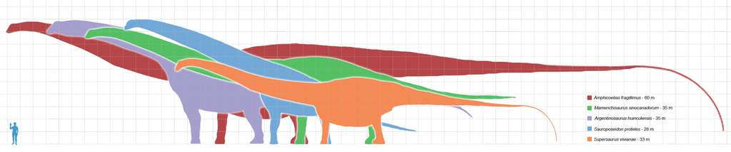Représentation schématique de la taille des plus grands dinosaures sauropodes, qui sont tous des animaux terrestres. L'argentinosaure Argentinosaurus huinculensis est représenté en mauve. Les carrés fournissent une échelle, sachant que leurs côtés mesurent 1 m. © Matt Martyniuk, Wikimedia Commons, cc by sa 3.0