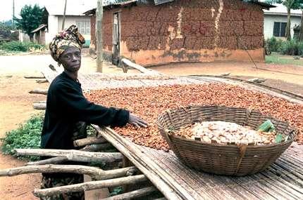 Séchage et tri des fèves de cacao. © Newkoforidua, Ghana, Robin Graham