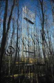 Echafaudages en forêt de chênes sessiles (Champenoux) pour la mesure in situ des échanges gazeux et de la croissance. (Photo Michel Pitsch)
