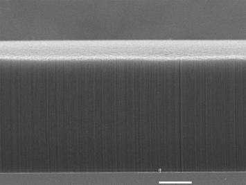 Une image au microscope électronique de la forêt de nanotubes de carbone verticalement arangés. Crédit : Rensselaer Polytechnic Institute