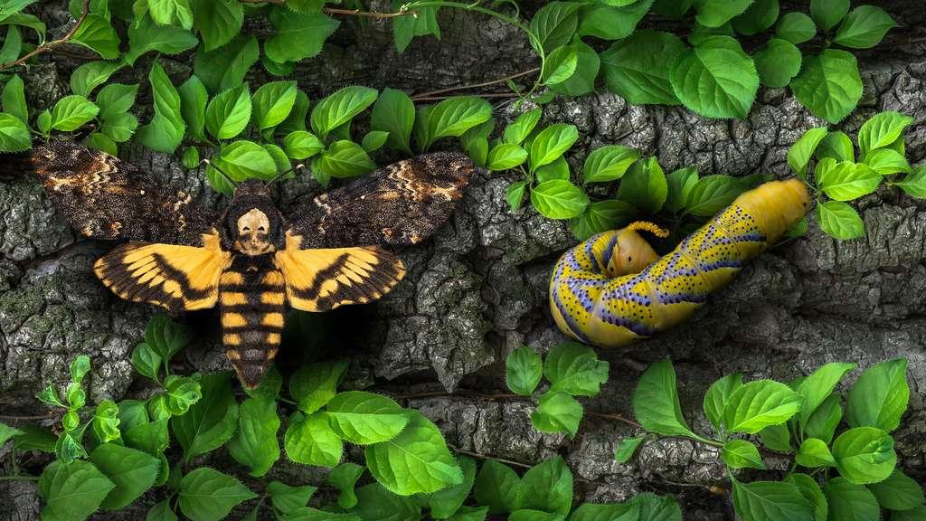 Un papillon qui fait froid dans le dos